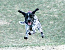 10 Reasons to Foster a GSP