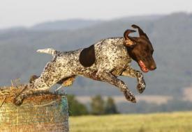 Outside Magazine's 20 Best Dog Breeds for Runners